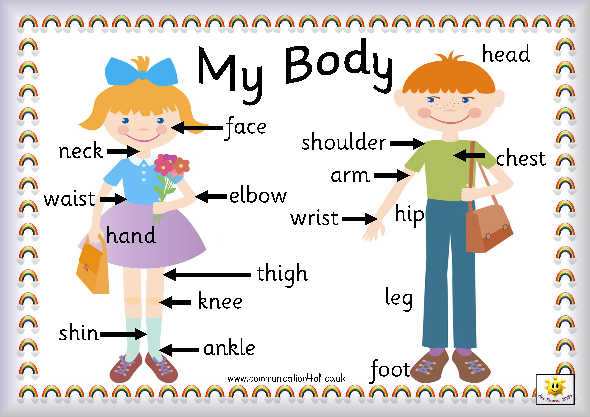 590x417 Parts Of The Body Explained For Children Body And Organs Ks1