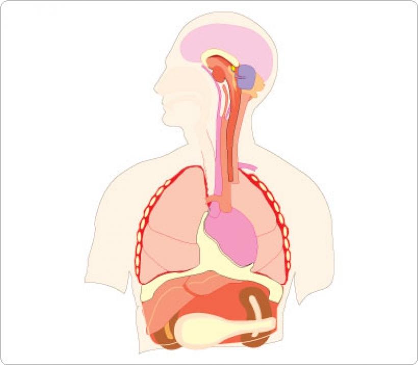 820x717 Human Body Parts Clipart Human Body Parts Clipart 128 401 X 351