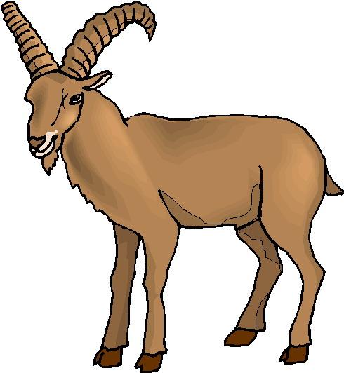 490x532 Goat Clipart Clipart Kid 3