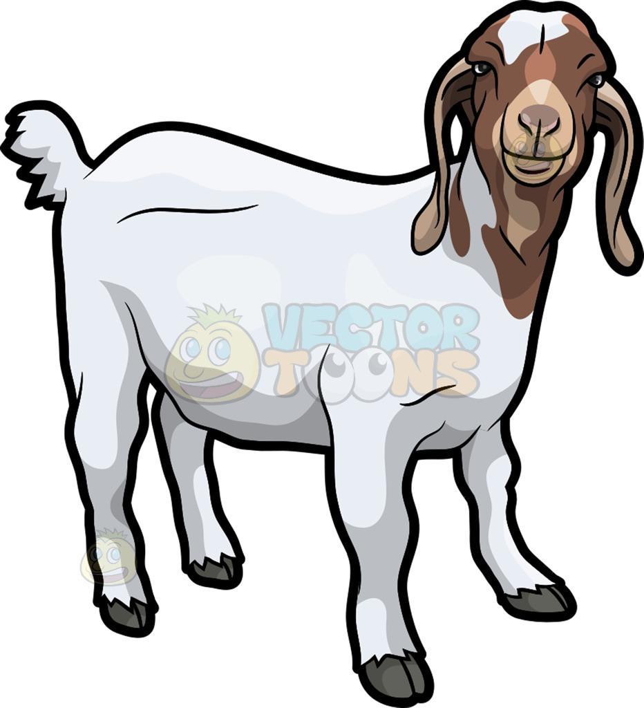 932x1024 Czeshop Images Boer Goat Vector