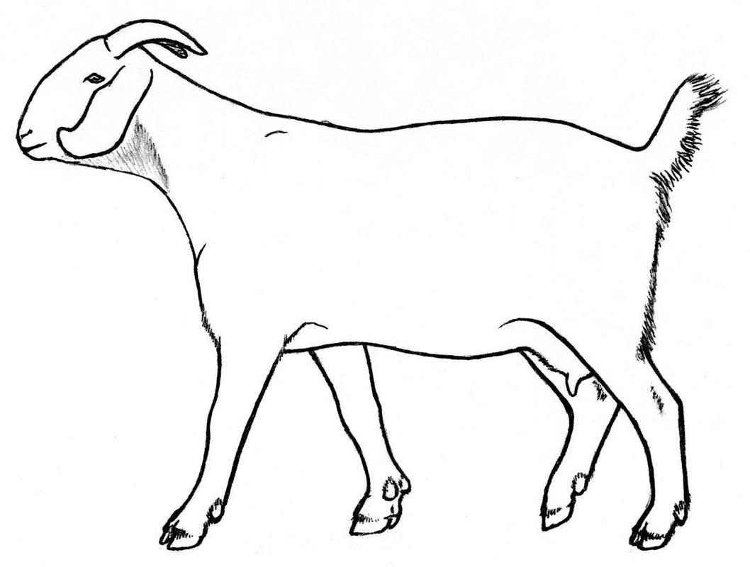 1058x800 Goat Drawings