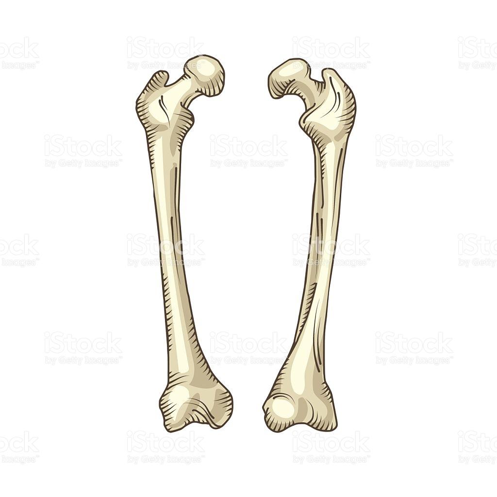 1024x1024 Bones Clipart Realistic