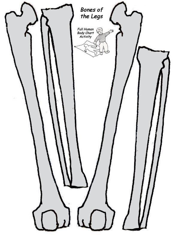 Bones template free download best bones template on clipartmag 578x782 bones clipart leg bone maxwellsz