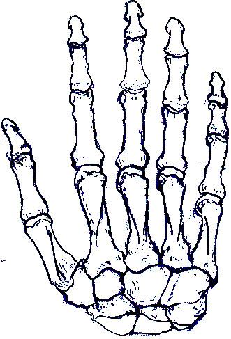 331x487 Bones Clipart Skeleton Hand