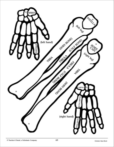 This is a graphic of Printable Skeleton Bones with body