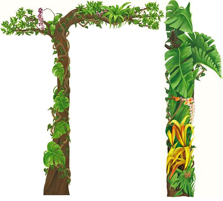 750x675 Foliage Clipart Jungle Border