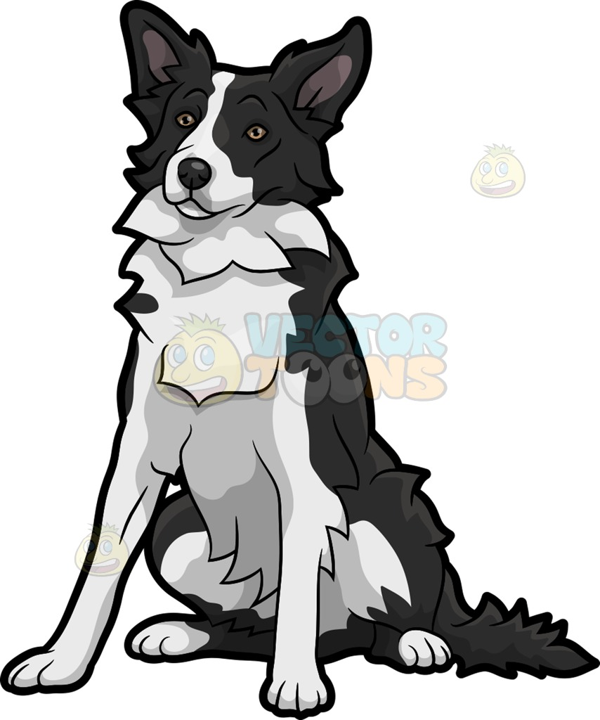 854x1024 A Quiet Border Collie Dog Cartoon Clipart