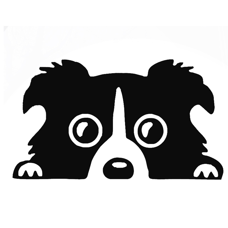 800x800 Border Collie clipart cute