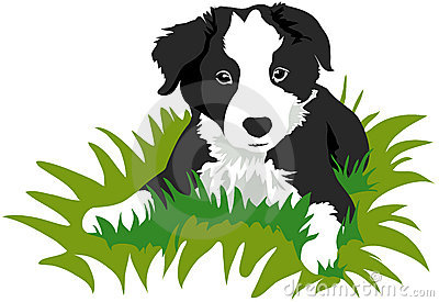 400x275 Bearded Collie Clipart Animated