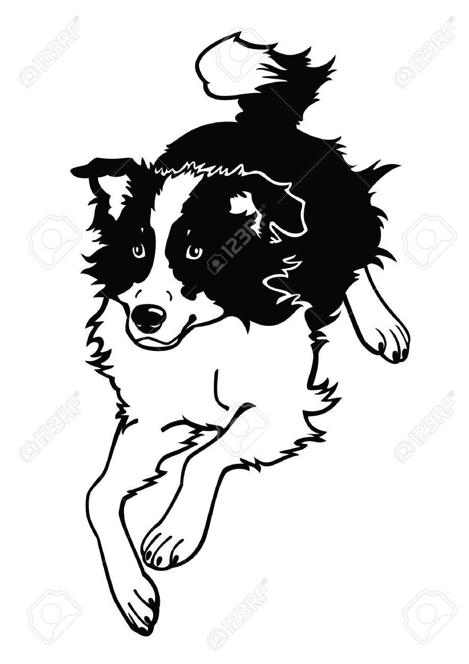 919x1300 Border Collie Clipart Black And White