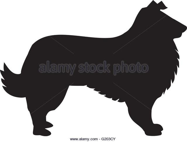 640x488 Border Collie Stock Vector Images