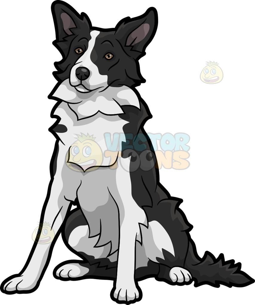 854x1024 Border Collie clipart puppy