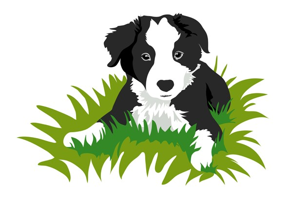 591x405 Graphics For Border Collie Graphics