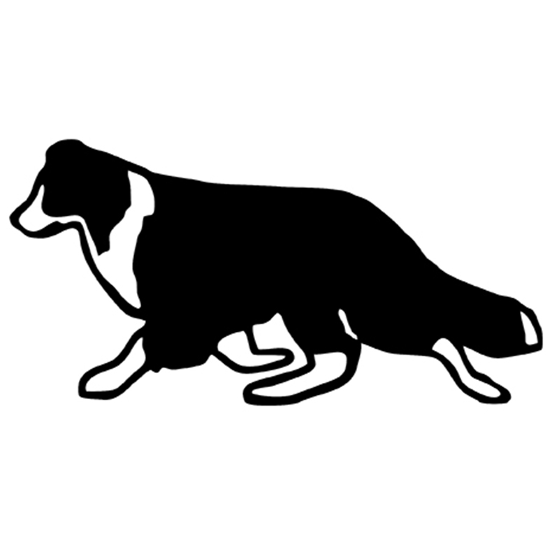 800x800 Graphics For Dogs Border Collie Graphics