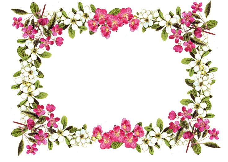 736x525 Flower Border Clipart