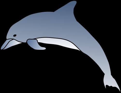 501x385 Bottlenose Dolphin Clipart Cartoon