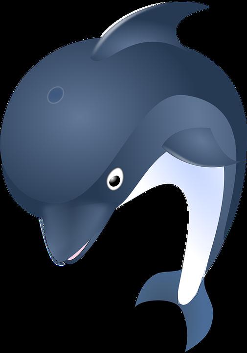 505x720 Bottlenose Dolphin Clipart Ocean Animal