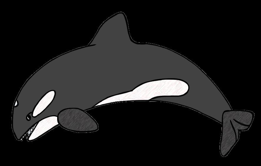 886x565 Whale Clip Art Images Free Clipart 2
