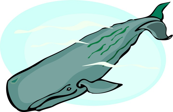 720x467 Whale Clipart And Illustration 2 Whale Clip Art Vector Image 5 4