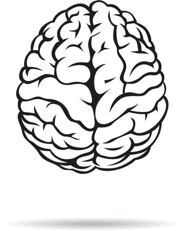 625x783 Brain Clipart Black And White