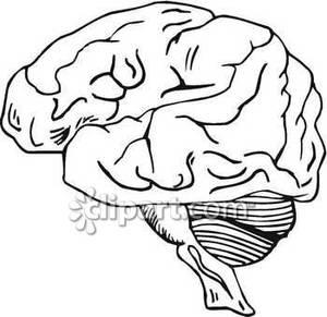 300x291 Brain In Black And White