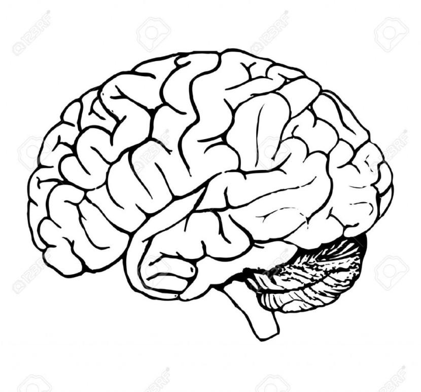 830x772 Brain Clipart Black And White