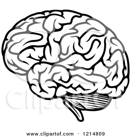 450x470 Clipart Of A Black And White Human Brain Royalty Free Vector Id