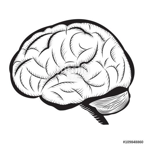 500x500 Black And White Brain Illustration Human Brain Outline Draw