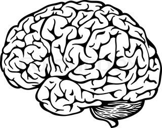 320x253 Human Brain Black And White