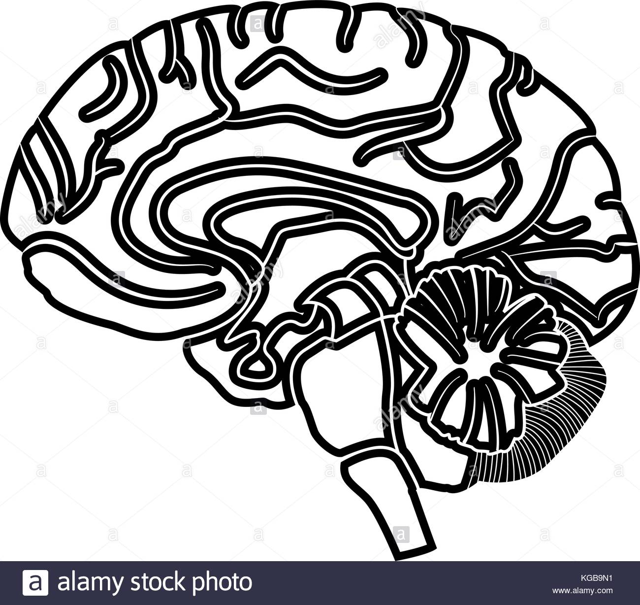 1300x1228 Mental Health Smart Brain Black And White Stock Photos Amp Images