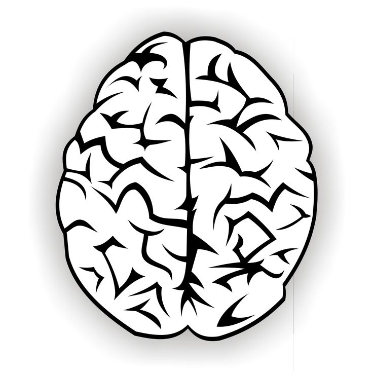 736x736 Brain Outline Clipart Black And White Forward