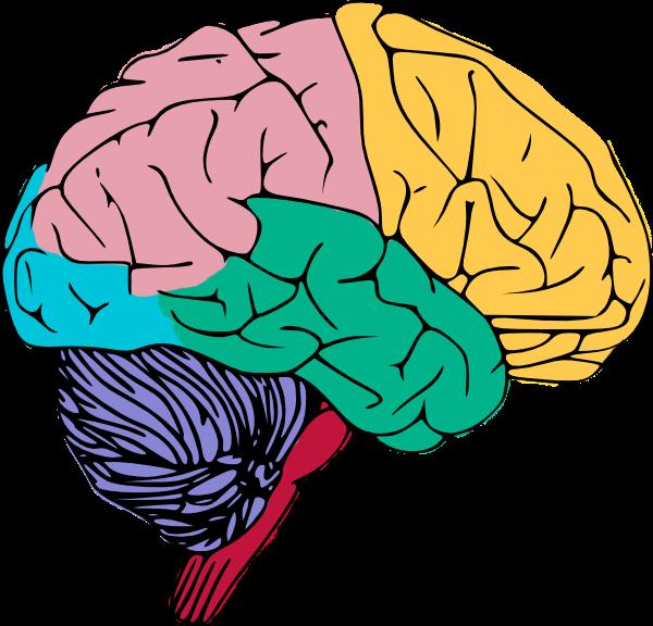 600x576 Mind Clipart Brain Break