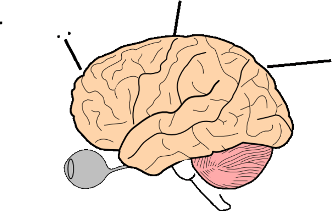 660x420 Brain Clip Art