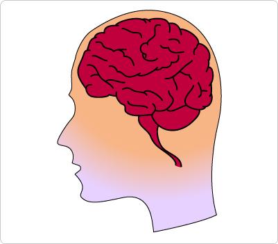 401x351 Brain Clipart 3