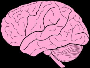 297x225 Brain Clip Art