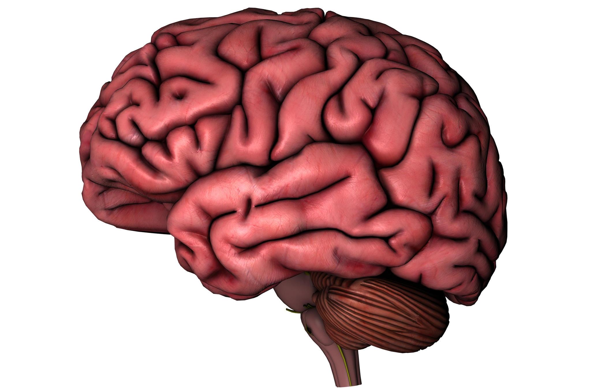 2048x1351 Brain Drawings Clip Art Cliparts