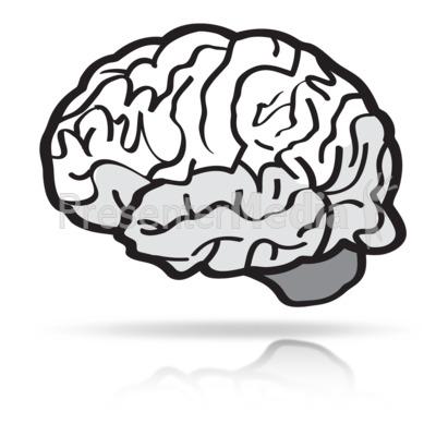 400x400 Brains Clipart Sketch
