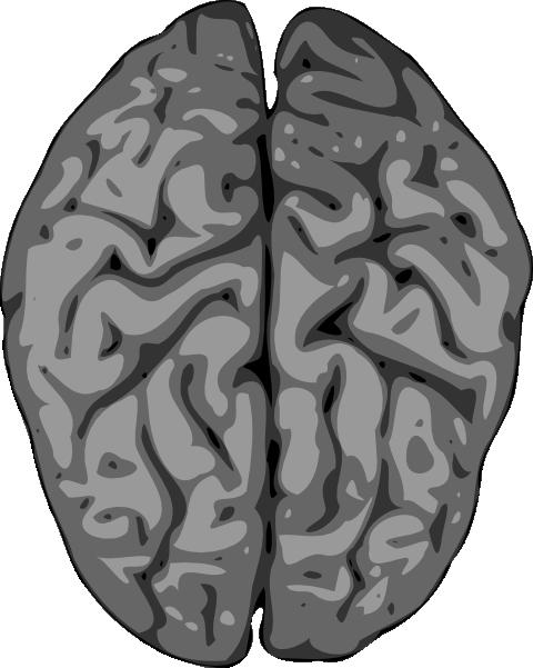 480x601 Grey Brain Clip Art