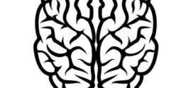272x125 Free To Use Amp Public Domain Brain Clip Art On Brain Clipart Free
