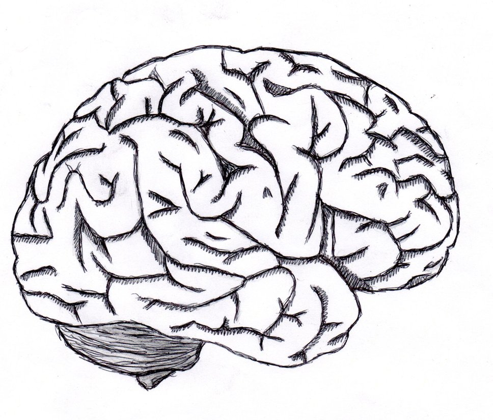 968x825 Brain Clipart Easy