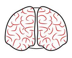 236x191 Brain Clipart Front