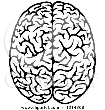 450x470 Brain Drawings Clip Art Cliparts