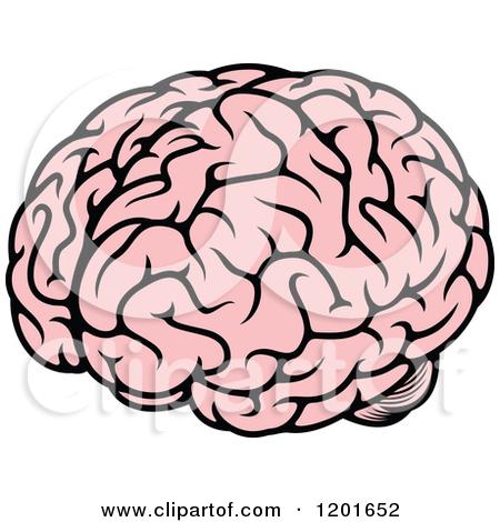 450x470 Brain Clipart Human Brain