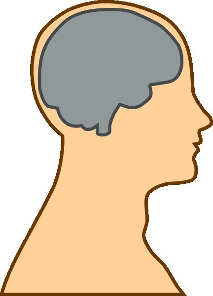 432x599 Medical Diagram Of Brain Clip Art Free Vector 4vector