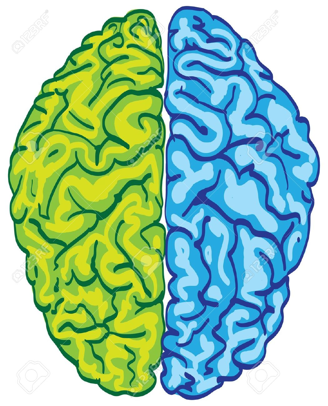1050x1300 Best Brain Clipart