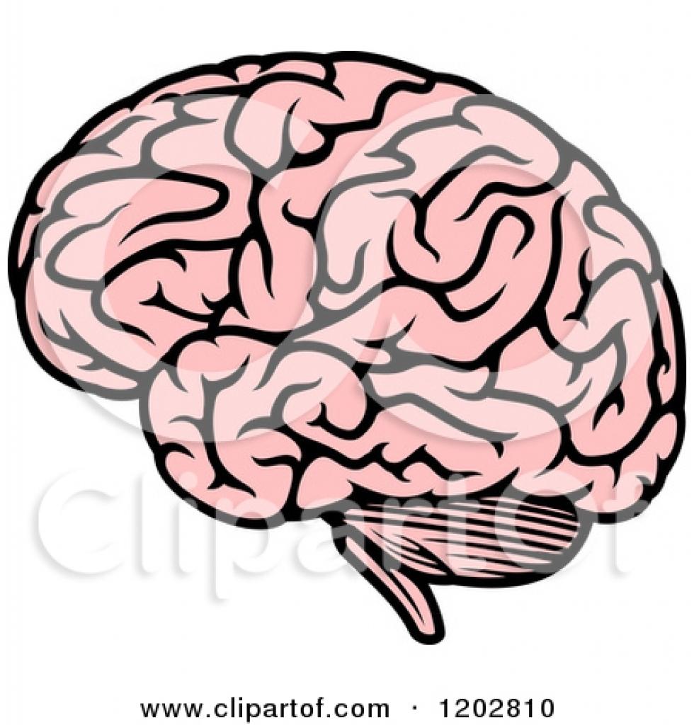 980x1024 Human Brain Clipart Human Brain Clipart Human Brain Clipart
