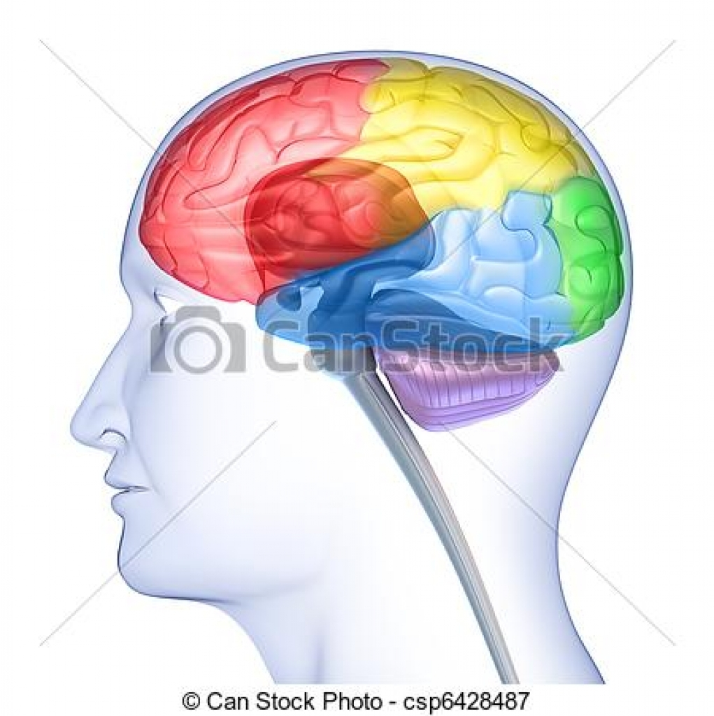 1021x1024 Clipart Brain In Head Clipart Brain In Head Brain Illustrations
