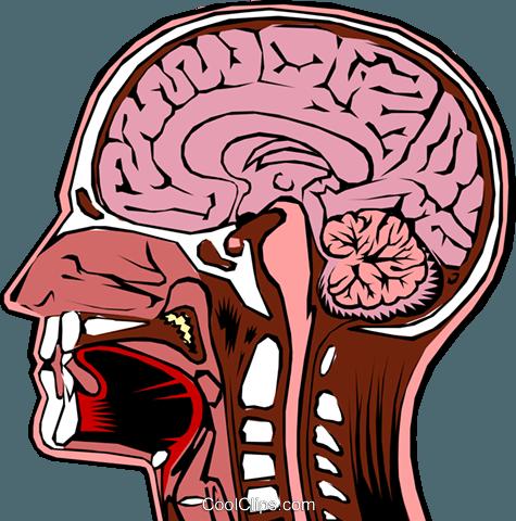 475x480 Human Head Cross Section Royalty Free Vector Clip Art Illustration