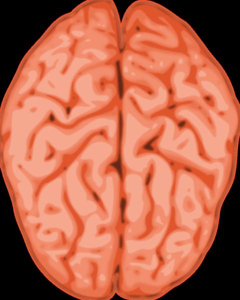480x601 Weak Brain Cliparts 273634