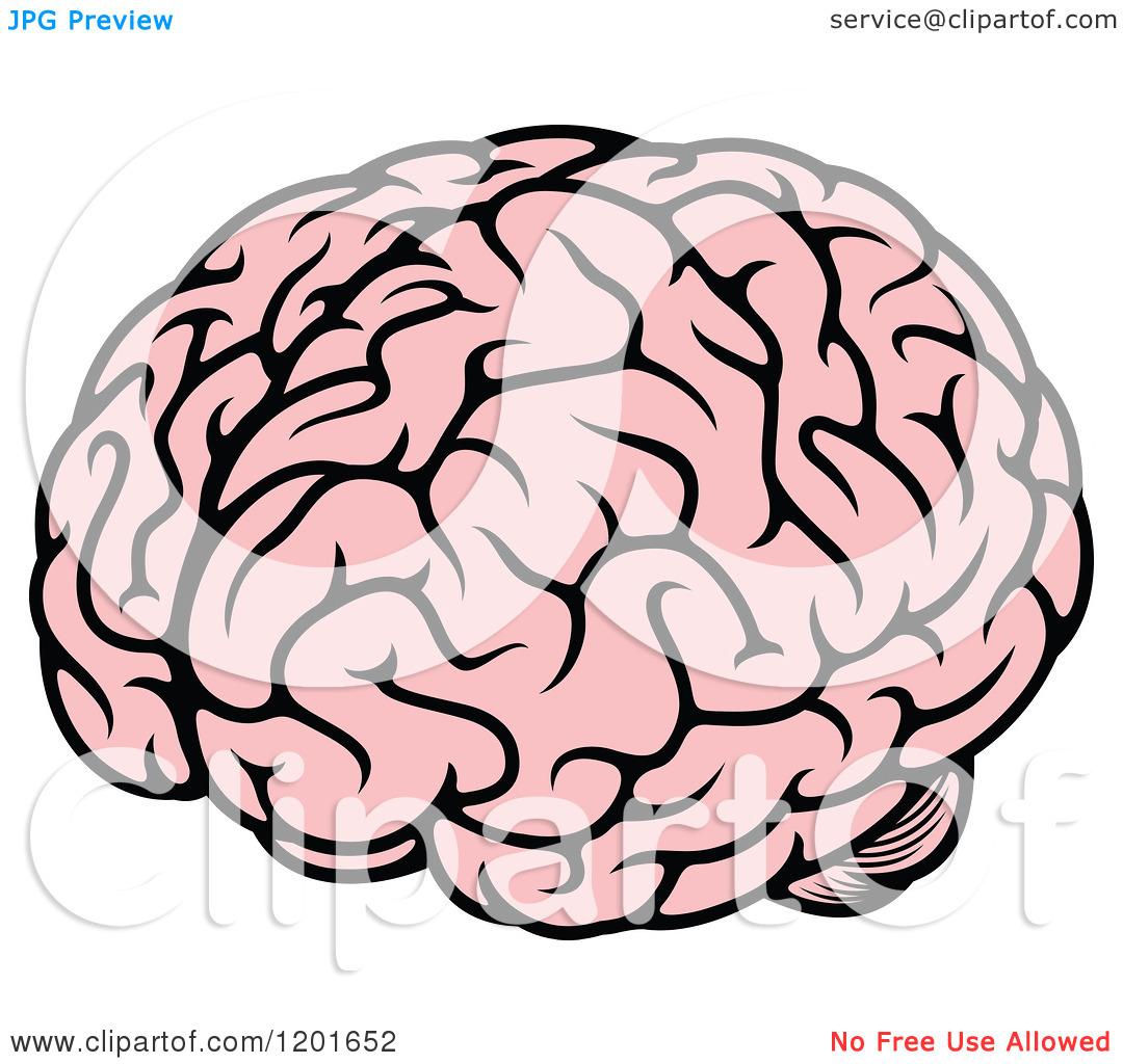 1080x1024 Brain Clipart Transparent